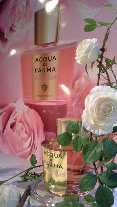 Rosa nobile new fragrance of Aqua di Param