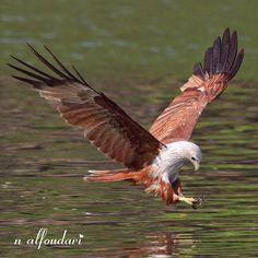 Eagle Langkawi by naser alfoudari on 500px