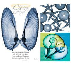 x-Ray photography of seashells. Art Sea Beach: http://www.artseabeach.com/2013/11/x-ray-photography-of-seashells.html