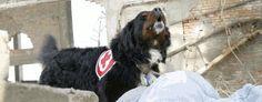 Metodika výcviku záchranárskych psov
