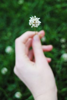 She Appreciates The Smallest Things. Picking up little flowers, fragrant ones to smell, or fragrant objects. Or lovely ones to look at, textured ones to feel, etc. Little Flowers, My Flower, Flower Power, Clover Flower, Alaska Young, Foto Bts, Le Jolie, Anne Of Green Gables, Beautiful Hands