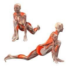 Low lunge, right leg forward - Ashva Sanchalanasana right - Yoga Poses…