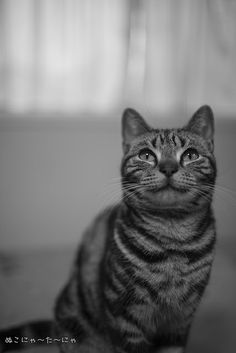 Sakura  cat B/W