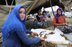 How Turkey is tackling child labor in hazelnut harvesting - CSMonitor.com