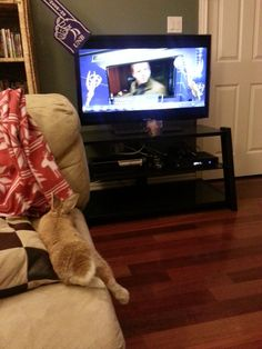 Bunny relaxes and watches a little television - November 8, 2013 - More at today's link: http://dailybunny.org/2013/11/08/bunny-relaxes-and-watches-a-little-television/ !