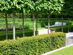 Modern Outdoor Patio With Formal Hedge