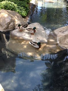 We have multiple waterfalls outside our facility, with ducks.  Very peaceful. One of the images is the view from the biodesigns' balcony.