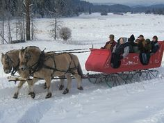 Fjord horse - Sleigh ride in Montana
