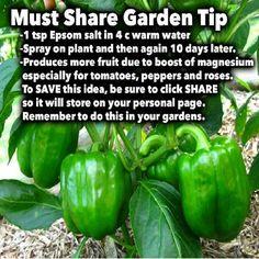 Epsom Salt Garden Tip