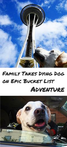 A family said goodbye to their terminally ill senior dog by taking him on an epic bucket list adventure vacation. Look where they went!
