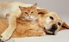 Man's best friend?: While cats are falling, the number of dogs is on