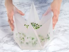 Microgarden by Tomorrow Machine - News - Frameweb
