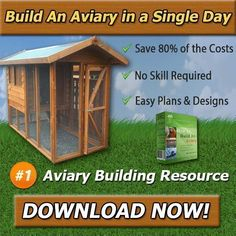 How to Build An Aviary I want to talk to you about new guide I came across called 'How To Build An Aviary'. It details step-by-step how to build your very own aviary and unlocks the secrets to building your own aviary, at a fraction of the price.. If you ask me where you can find a step-by-step guide on aviary... #AviaryBackyard, #AviaryBlueprints, #AviaryBuild, #AviaryBuildingPlan, #Bird, #BirdRoom, #Birds, #HowToBuildAnAviary, #HowToBuildAnAviaryReview #buildaviary
