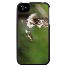Hummingbird Building a Nest iPhone 4 Covers