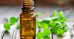 Mentha oil on MCX settled up by 1.7% at 1044.9 on the back of rising demand at the spot market. Besides, tight stocks position following restricted arrivals