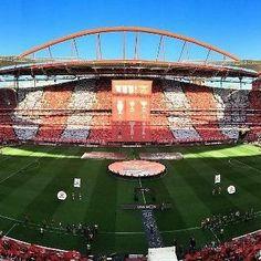 """""""Estádio da Luz O maior de Portugal Tua beleza real Da-te um valor tão profundo. Estádio da Luz O BENFICA é Campeão O mais lindo da Nação E és o maior do Mundo."""" #CarregaBenfica #Juntos #SejaOndeFor #BenficaMCMIV"""