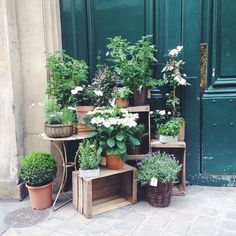 Going on a foliage hunt today in Paris 🌿 here is one from yesterday
