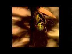 Corpo Dourado - Abertura (1998) - YouTube