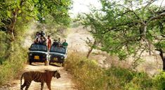 Online Booking Nainital Corbett Tour Package 5 Days with KDH Travels. Nainital, Packaging, Tours, Day, Travel, Animals, Viajes, Animales, Animaux