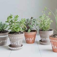 DIY herb pots... All you need is terracotta pots paint a chalk pen and of course the herbs! Easy! #herbs #houseplants