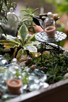 fairy garden I made by @Ethel Gloves