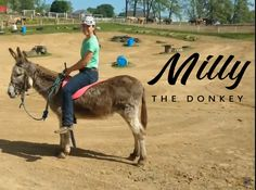 """We have several great donkeys for sale & been thru our horsemanship program. Used for teaching students the value of patience & softness. Some ride & drive; all sizes from mini to standard! Prices range from $750 to $2500. View our YouTube Channel's Playlist, """"Horses For Sale,"""" for available videos of horses AND donkeys!  Call/text Ted 330-231-7500.   If you've never had a good donkey you are missing out on a blessing!"""