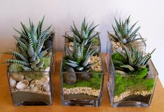 spiky lynzariums - All For Garden Succulents In Containers, Cacti And Succulents, Planting Succulents, Planting Flowers, Mini Cactus Garden, Succulent Gardening, Terrarium Diy, Decoration Plante, Cactus Y Suculentas