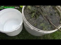 Pozbądź się mszyc, gnojówka z pokrzywy - naturalny insektycyd - YouTube Garden Pests, Plants, Youtube, Gardening, Lawn And Garden, Flora, Plant, Youtubers, Youtube Movies