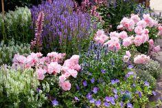 hardy salvia, perennial salvia, Wood Sage, Salvia x Superba, Salvia Nemorosa, Salvia x Sylvestris, Salvia Mainacht, Salvia Caradonna, violet flowers, fragrant flowers