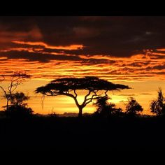 I will have my Lion King moment someday in the Serengeti!