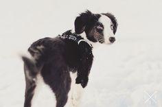 Ponyo on the snow ^_^