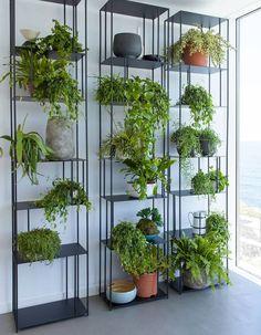 Un jardin d'hiver rafraîchissant en accumulant des plantes sur des étagères
