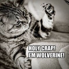 I really hope the next real Wolverine movie features a scene with Hugh Jackman just attacking a living room sofa.