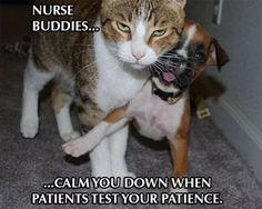 Nurse buddies...calm you down when patients test your patience.