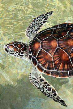Морская черепаха. Turtle.