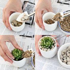 As suculentas são ideais para quem não conta com muito tempo. Além disso, você consegue decorações lindas com elas! #suculentas #plantas #decor #decoração
