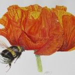 British Bee Paintings « Cath Hodsman, British Wildlife and Natural History Artist British Bees, Bee Painting, British Wildlife, Fantasy Fiction, Gcse Art, Natural History, Art Projects, Insects, Nature