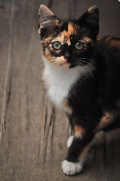 Calico cat... Rilla - Yup cat with my name!