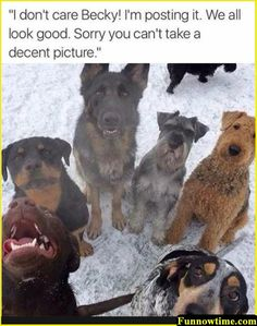 """Funnowtime, Social Fun Platform We share in funny pictures and funny animals categories while sharing while """"Random Funny Animal Pictures Of The Day - 22 Pics"""". Cat And Dog Memes, Funny Dog Memes, Silly Memes, Funny Cats And Dogs, Funny Animal Memes, Cat Memes, Cute Dogs, Funny Animals, Cute Animals"""