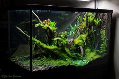 ronbeckdesigns: Peninsula August 8 by. Gecko Terrarium, Aquarium Terrarium, Reptile Terrarium, Planted Aquarium, Gecko Vivarium, Water Terrarium, Reptile House, Reptile Room, Reptile Cage