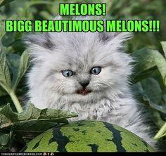 Meh melon!!!!!!!!!!!!!!!!