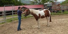 What do you need to teach your horse first?