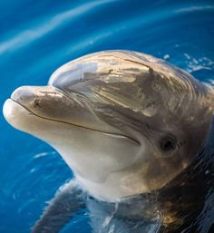 Smiling dolphin face.