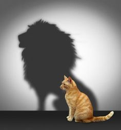 definitely ginger cats have lion complexes! Cute Funny Animals, Cute Baby Animals, Animals And Pets, Cute Dogs, Funny Cats, Cute Kittens, Cats And Kittens, Cute Cat Wallpaper, Tier Fotos