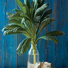 Growing kale is easy in the garden and Tuscan kale is especially delicious as well as versatile in the kitchen. Garden Bugs, Edible Garden, Garden Plants, Garden Spaces, Potted Plants, Outdoor Gardens, Indoor Gardening, Vegetable Gardening, Organic Gardening