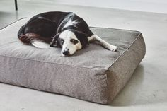 Bring your faithful friend into the heart of your home with the stylish Stella lounge cushion. This slightly higher cushion provides ultimate comfort for your dog without compromising on your interior design. Made from a durable, washable fabric a. Cat Basket, Cat Cave, Lounge Cushions, Felt Cat, Dog Travel, Black Chevron, Dog Accessories, Bed Covers, Dog Bed