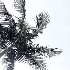 Breezy skies