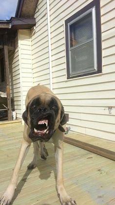 22 Hunde, die ein bisschen komisch sind