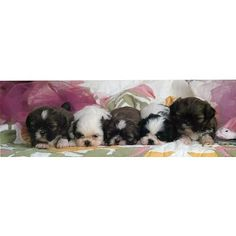 5 Puppies (On Bed)