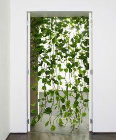 Séparation entre les lits: plante grimpante avec tuteurs fils transparent